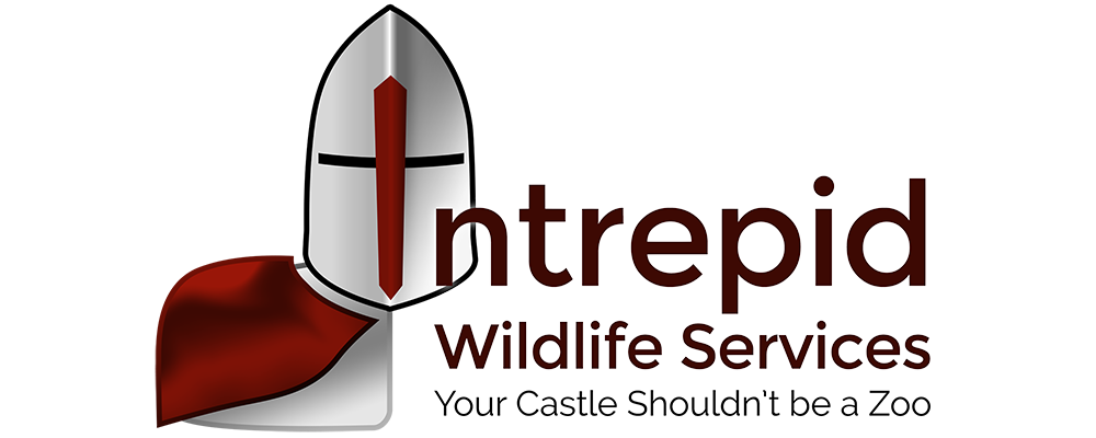 Intrepid Wildlife Services