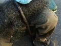 Removing Black Snake from Fruit Netting