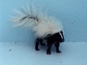 Skunk Removal Service Westchester, NY