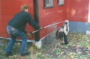 Two Skunks removed from Westchester home