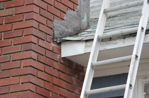 Wildlife Damage Repair After Photo Westchester NY