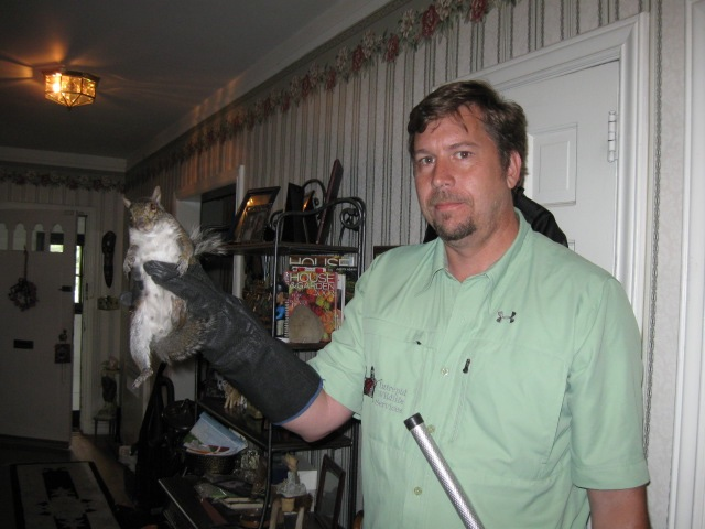 gray squirrel removal ardsley ny