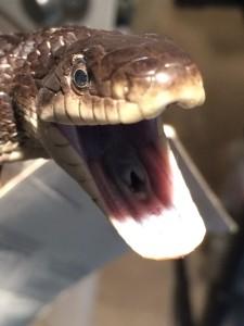 Garrison NY Snake Removal