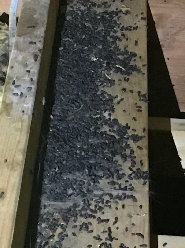 Emergency Bat Removal in Cross River, New York